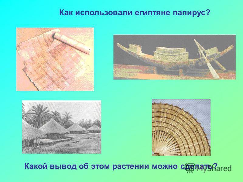 Как использовали египтяне папирус? Какой вывод об этом растении можно сделать?