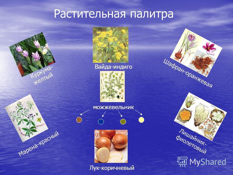Растительная палитра Куркума- желтый Марена-красный Лишайник- фиолетовый Лук-коричневый Вайда-индиго Шафран-оранжевая можжевельник