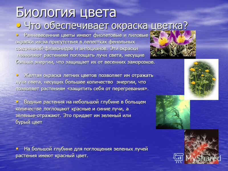 Биология цвета Что обеспечивает окраска цветка? Что обеспечивает окраска цветка? Ранневесенние цветы имеют фиолетовые и лиловые Ранневесенние цветы имеют фиолетовые и лиловые окраски из-за присутствия в лепестках фенольных соединений-флавоноидов и ан