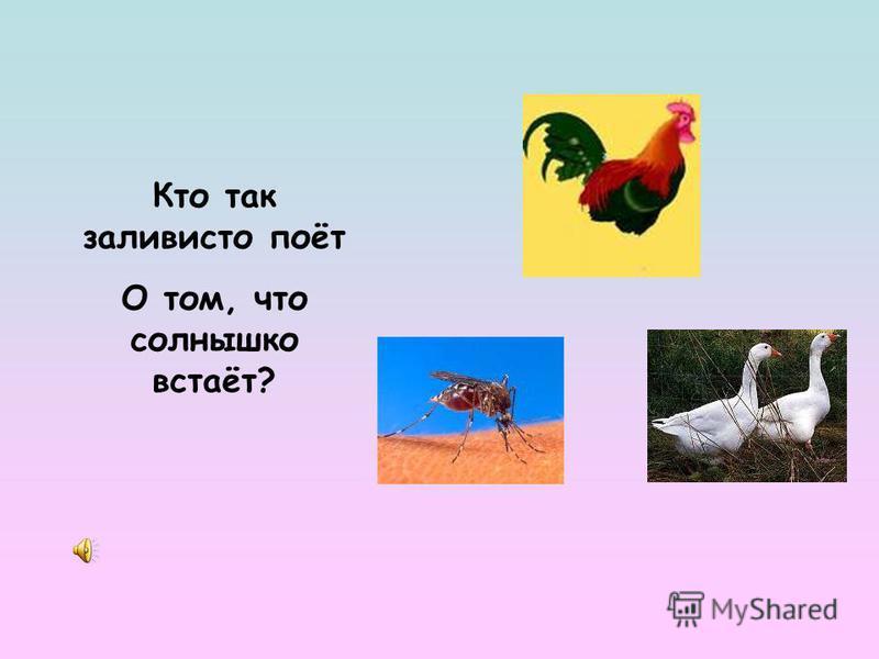ДОУ 41 Руденко А.М.