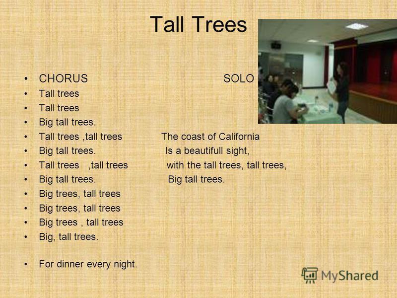 Tall Trees CHORUS SOLO Tall trees Big tall trees. Tall trees,tall trees The coast of California Big tall trees. Is a beautifull sight, Tall trees,tall trees with the tall trees, tall trees, Big tall trees. Big trees, tall trees Big, tall trees. For d