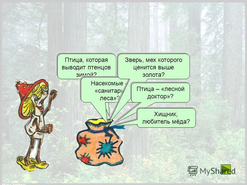Птица, которая выводит птенцов зимой? Насекомые – «санитары леса»? Зверь, мех которого ценится выше золота? Птица – «лесной доктор»? Хищник, любитель мёда?