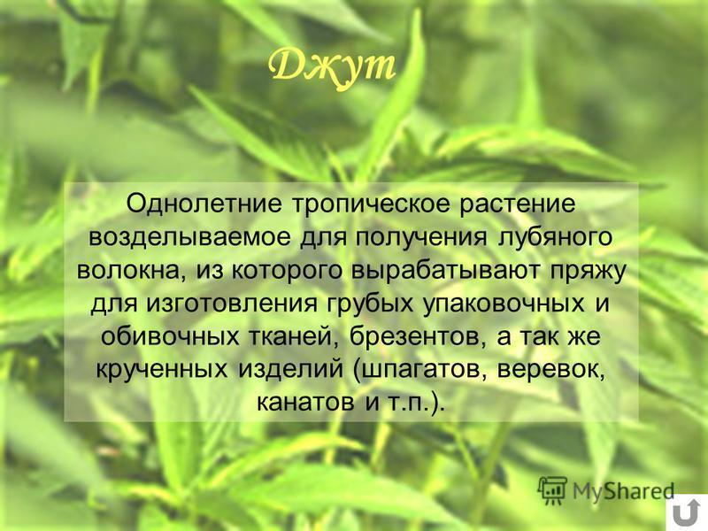 растение из которого делают пряжу - фото 8