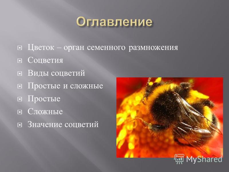 Цветок – орган семенного размножения Соцветия Виды соцветий Простые и сложные Простые Сложные Значение соцветий