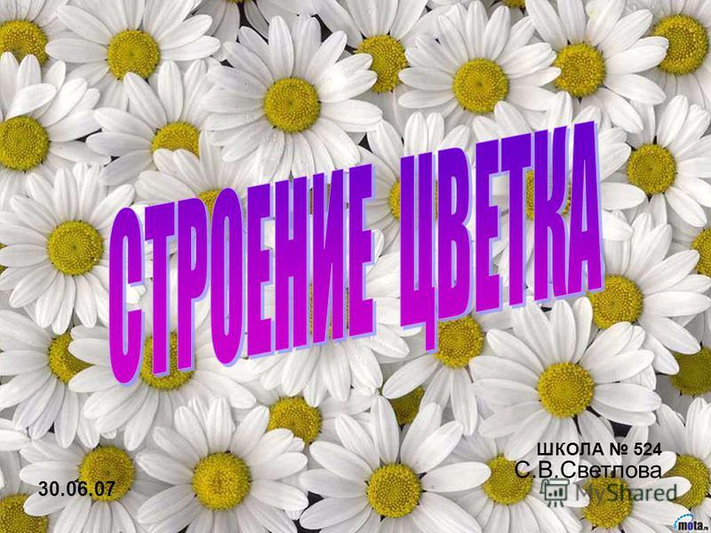 30.06.07 ШКОЛА 524 С.В.Светлова