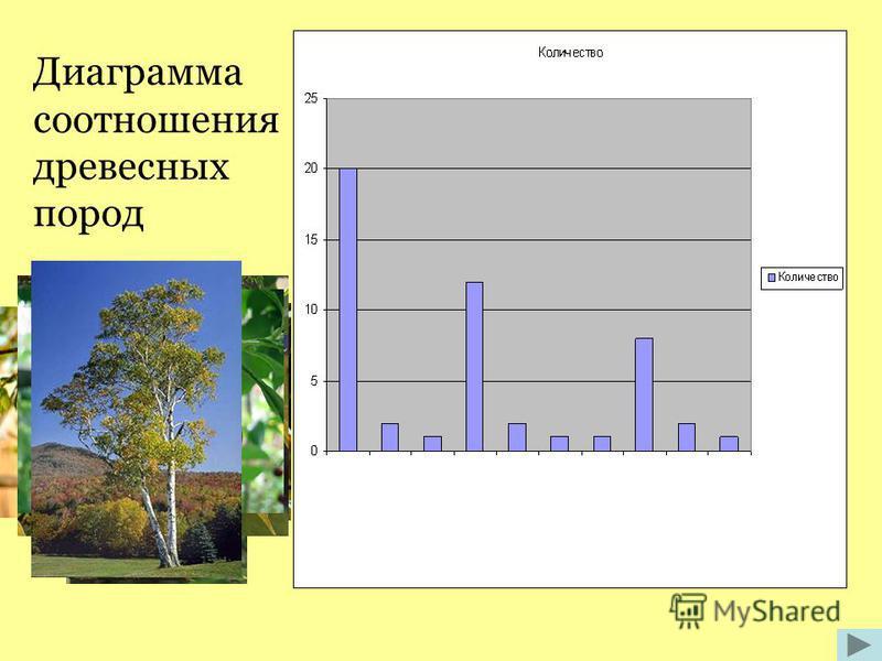 Диаграмма соотношения древесных пород