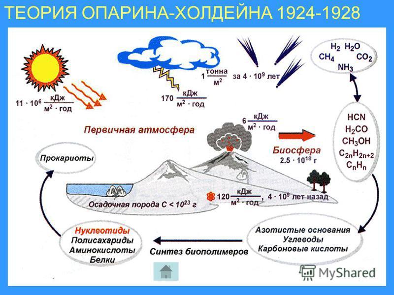 ТЕОРИЯ ОПАРИНА ТЕОРИЯ ОПАРИНА-ХОЛДЕЙНА 1924-1928