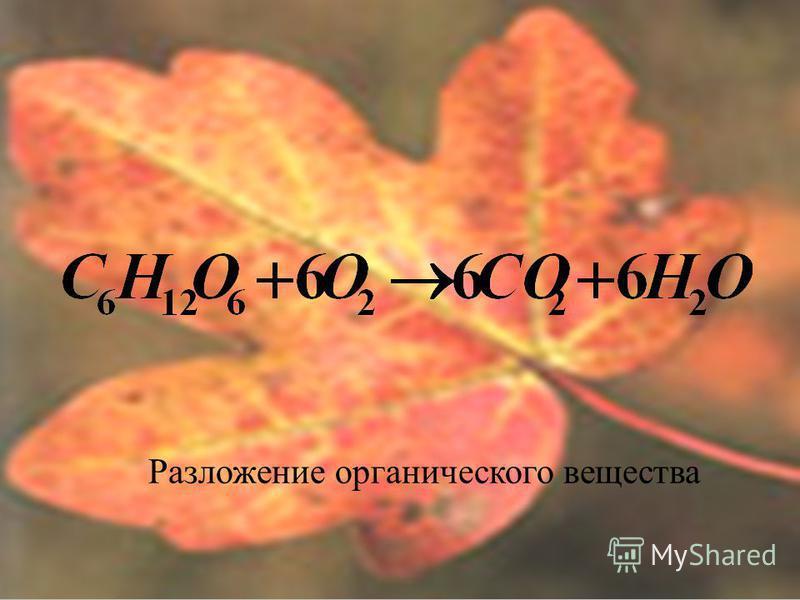 Разложение органического вещества