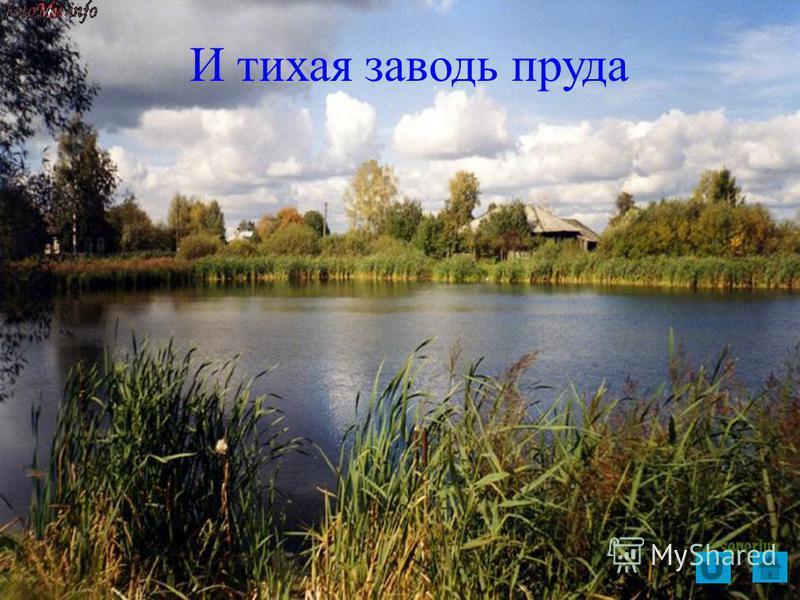 И тихая заводь пруда