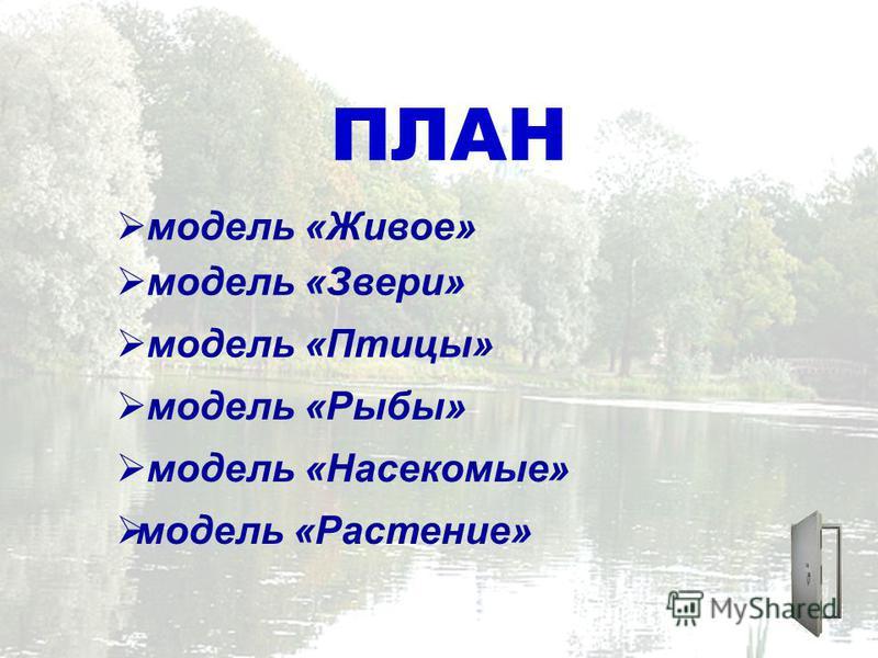 ПЛАН модель «Живое» модель «Звери» модель «Птицы» модель «Рыбы» модель «Насекомые» модель «Растение»