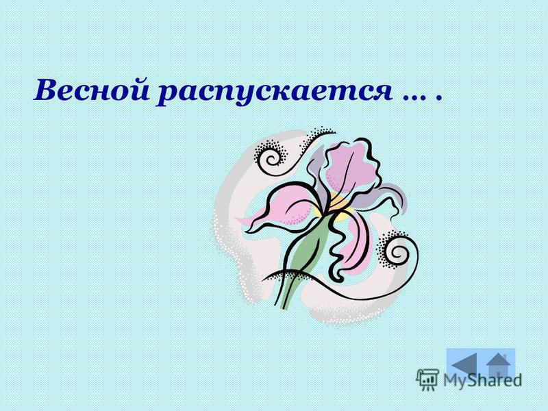 Весной распускается ….