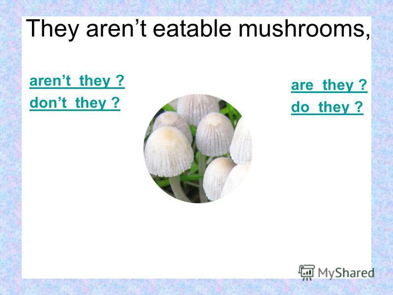 arent they ? dont they ? are they ? do they ? They arent eatable mushrooms,