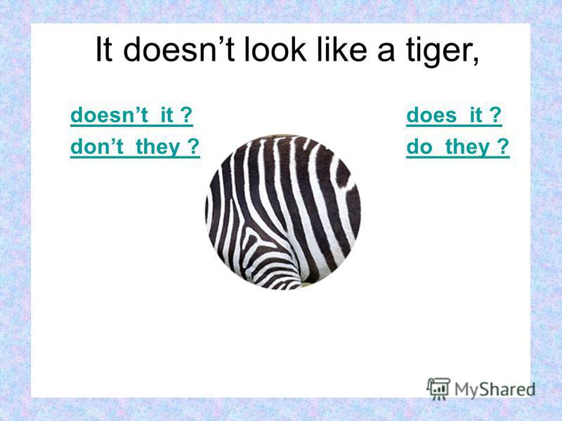 doesnt it ? dont they ? does it ? do they ? It doesnt look like a tiger,