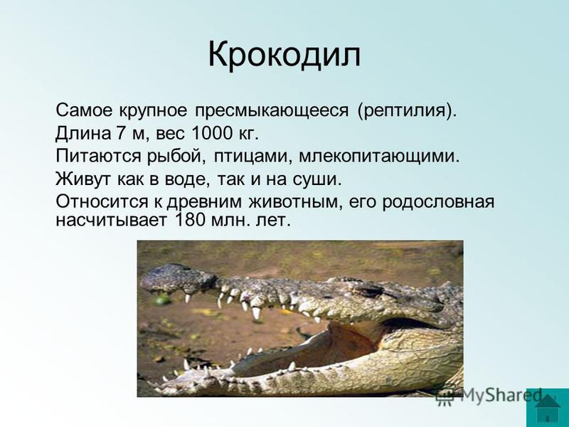 Крокодил Самое крупное пресмыкающееся (рептилия). Длина 7 м, вес 1000 кг. Питаются рыбой, птицами, млекопитающими. Живут как в воде, так и на суши. Относится к древним животным, его родословная насчитывает 180 млн. лет.