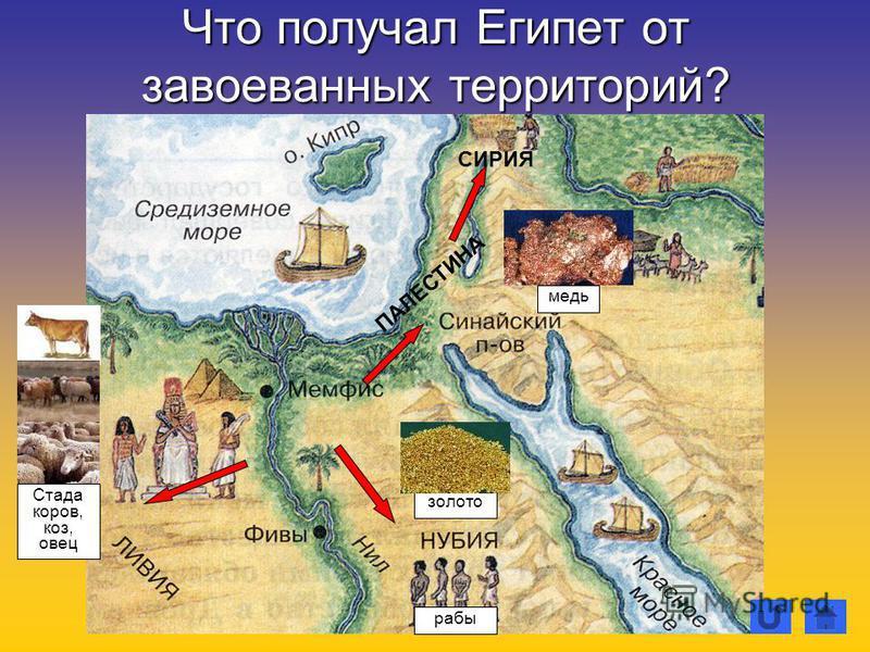Что получал Египет от завоеванных территорий? Стада коров, коз, овец ПАЛЕСТИНА СИРИЯ золото медь рабы