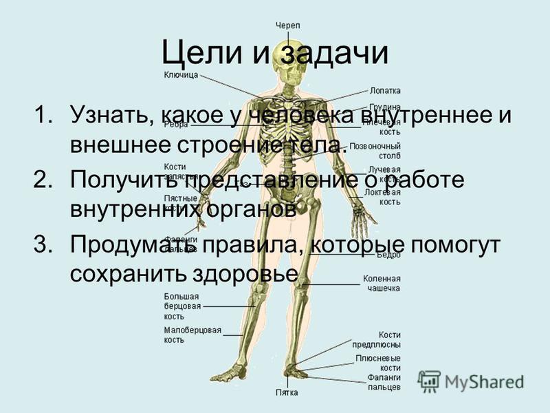 Цели и задачи 1.Узнать, какое у человека внутреннее и внешнее строение тела. 2. Получить представление о работе внутренних органов 3. Продумать правила, которые помогут сохранить здоровье