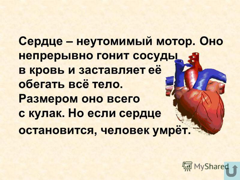 Сердце – неутомимый мотор. Оно непрерывно гонит сосуды в кровь и заставляет её обегать всё тело. Размером оно всего с кулак. Но если сердце остановится, человек умрёт.