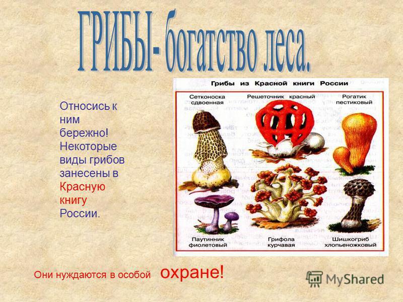 Желчный гриб Бледная поганка Ложно опенок Серно- желтый Ложно опенок Кирпично-красный