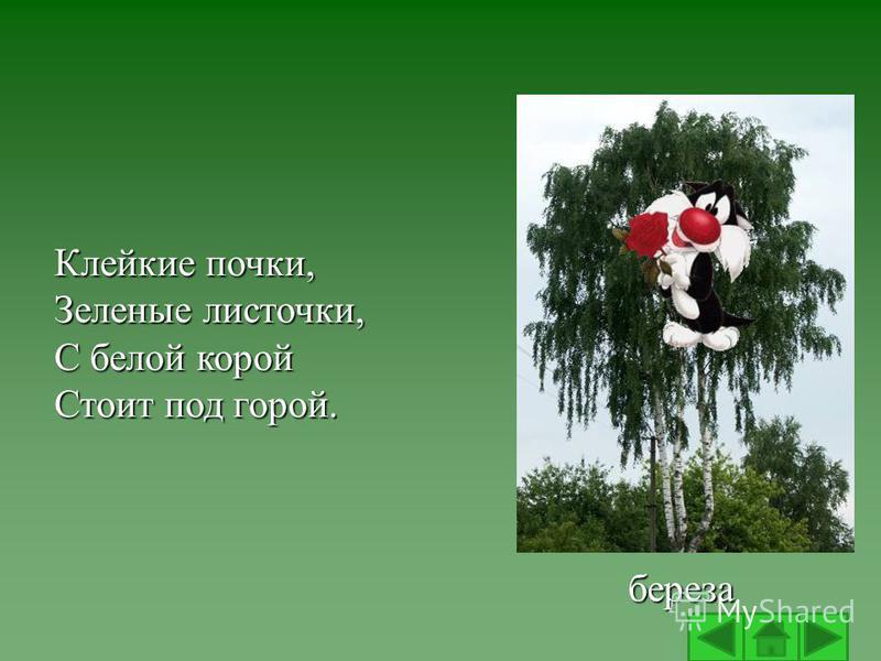 Клейкие почки, Зеленые листочки, С белой корой Стоит под горой. береза