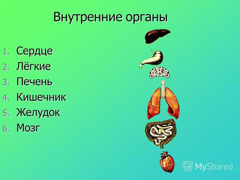 Внутренние органы 1. Сердце 2. Лёгкие 3. Печень 4. Кишечник 5. Желудок 6. Мозг