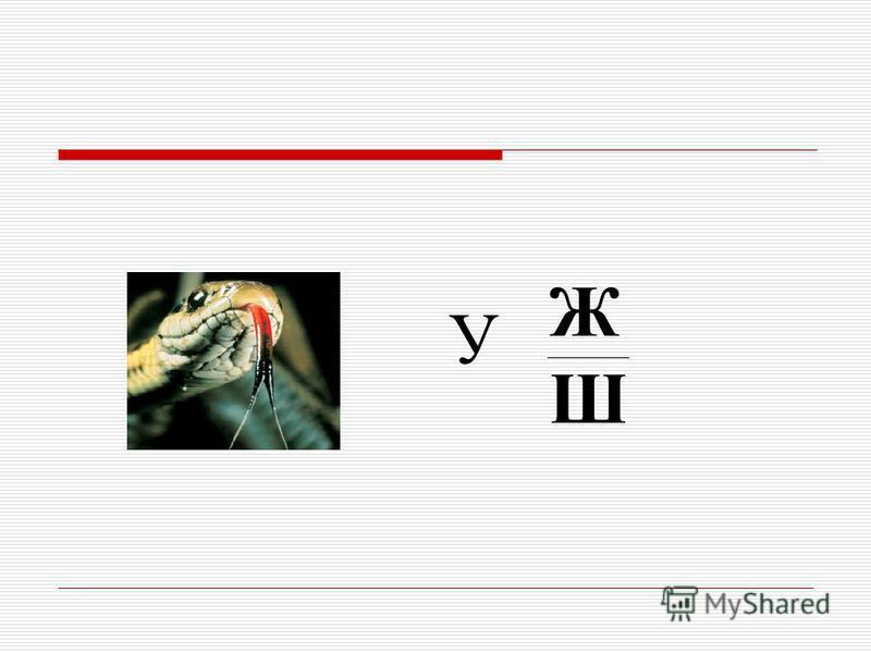 ЖШЖШ У