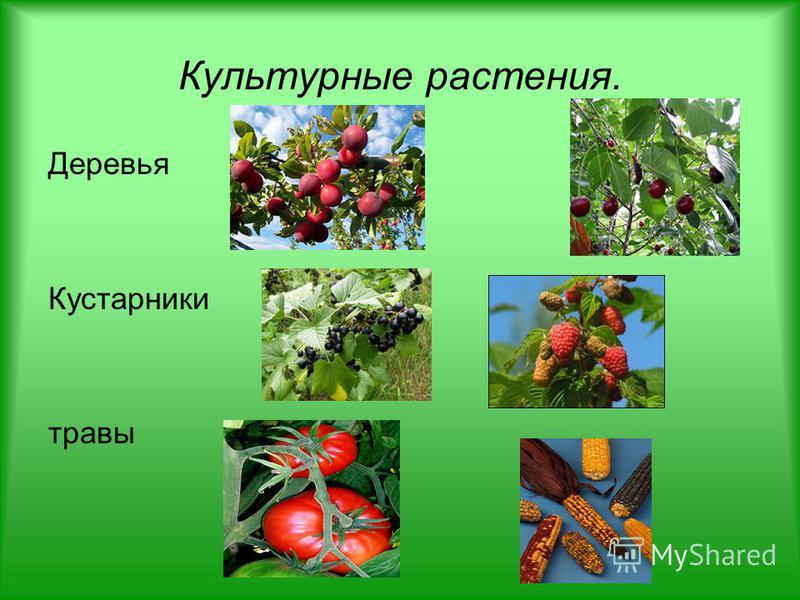 Культурные растения. Деревья Кустарники травы