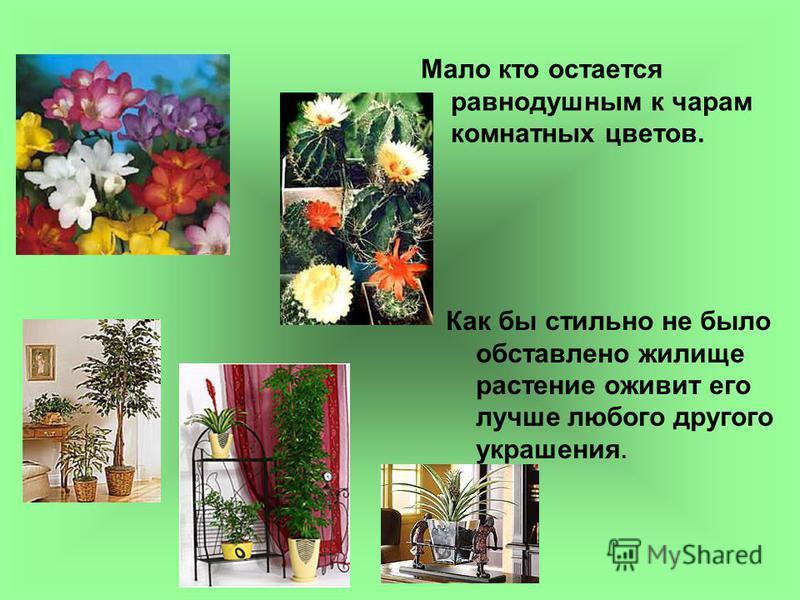Мало кто остается равнодушным к чарам комнатных цветов. Как бы стильно не было обставлено жилище растение оживит его лучше любого другого украшения.