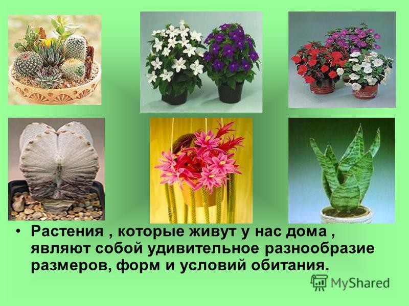 Растения, которые живут у нас дома, являют собой удивительное разнообразие размеров, форм и условий обитания.