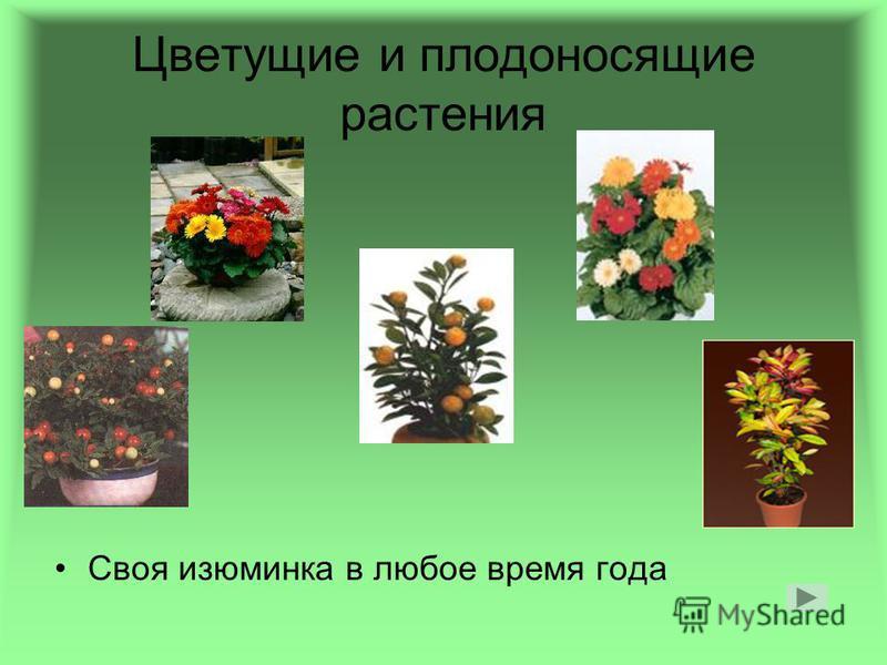 Цветущие и плодоносящие растения Своя изюминка в любое время года