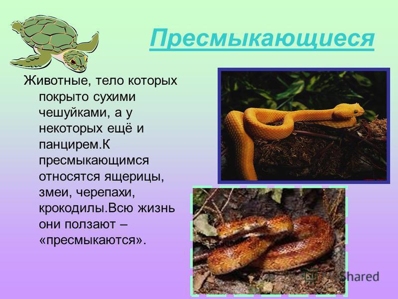 Пресмыкающиеся Животные, тело которых покрыто сухими чешуйками, а у некоторых ещё и панцирем.К пресмыкающимся относятся ящерицы, змеи, черепахи, крокодилы.Всю жизнь они ползают – «пресмыкаются».