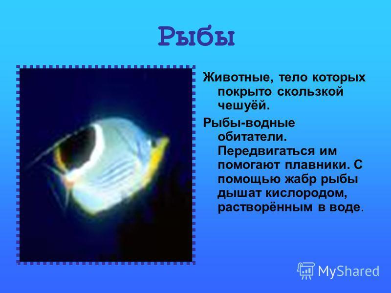 Рыбы Животные, тело которых покрыто скользкой чешуёй. Рыбы-водные обитатели. Передвигаться им помогают плавники. С помощью жабр рыбы дышат кислородом, растворённым в воде.