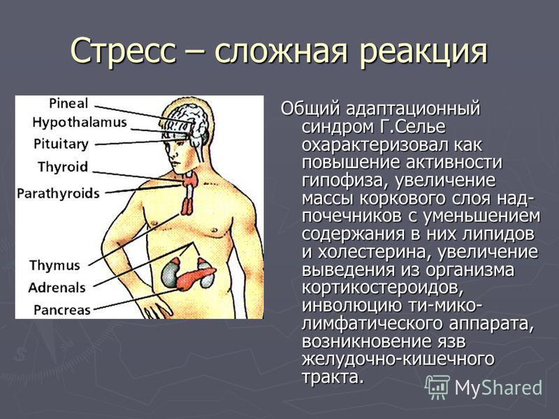Стресс – сложная реакция Общий адаптационный синдром Г.Селье охарактеризовал как повышение активности гипофиза, увеличение массы коркового слоя над- почечников с уменьшением содержания в них липидов и холестерина, увеличение выведения из организма ко
