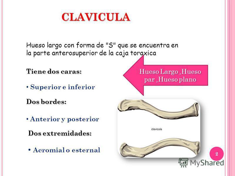 CLAVICULA Hueso largo con forma de S que se encuentra en la parte anterosuperior de la caja toraxica Tiene dos caras: Superior e inferior Dos bordes: Anterior y posterior Dos extremidades: Acromial o esternal 2 Hueso Largo,Hueso par,Hueso plano