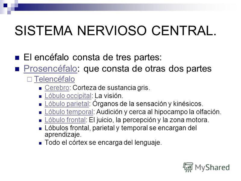 SISTEMA NERVIOSO CENTRAL. El encéfalo consta de tres partes: Prosencéfalo: que consta de otras dos partes Prosencéfalo Telencéfalo Cerebro: Corteza de sustancia gris. Cerebro Lóbulo occipital: La visión. Lóbulo occipital Lóbulo parietal: Órganos de l