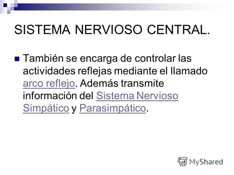 SISTEMA NERVIOSO CENTRAL. También se encarga de controlar las actividades reflejas mediante el llamado arco reflejo. Además transmite información del Sistema Nervioso Simpático y Parasimpático. arco reflejoSistema Nervioso SimpáticoParasimpático