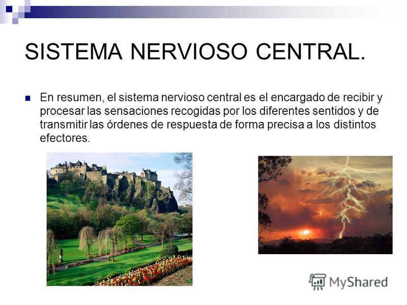 SISTEMA NERVIOSO CENTRAL. En resumen, el sistema nervioso central es el encargado de recibir y procesar las sensaciones recogidas por los diferentes sentidos y de transmitir las órdenes de respuesta de forma precisa a los distintos efectores.