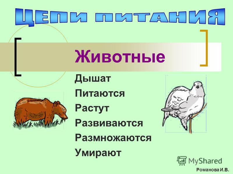 Животные Дышат Питаются Растут Развиваются Размножаются Умирают Романова И.В.