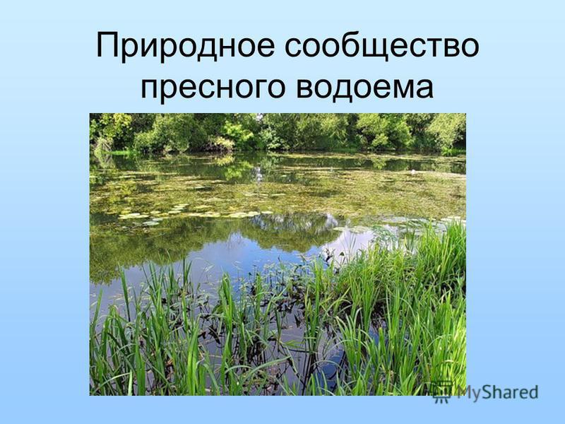Природное сообщество пресного водоема