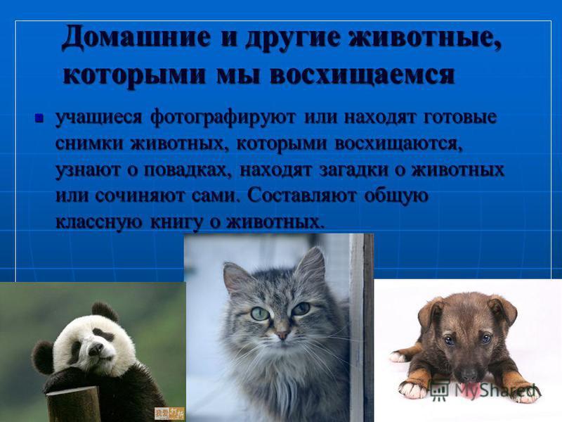 5 Домашние и другие животные, которыми мы восхищаемся учащиеся фотографируют или находят готовые снимки животных, которыми восхищаются, узнают о повадках, находят загадки о животных или сочиняют сами. Составляют общую классную книгу о животных. учащи