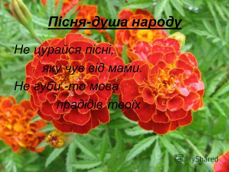 Пісня-душа народу Не цурайся пісні, яку чув від мами. Не губи -то мова прадідів твоїх
