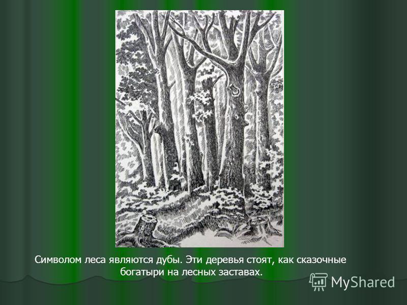 Символом леса являются дубы. Эти деревья стоят, как сказочные богатыри на лесных заставах.