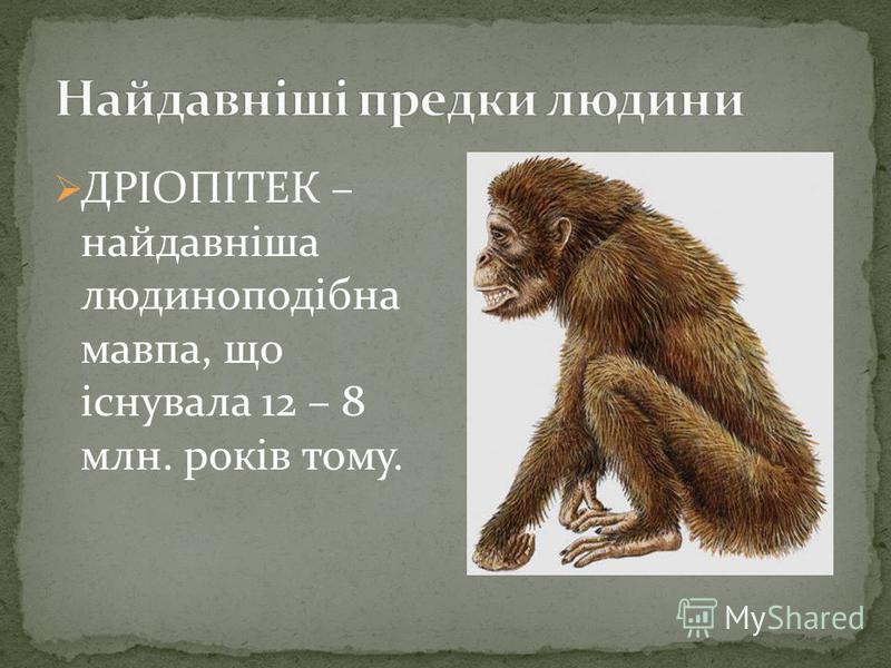 ДРІОПІТЕК – найдавніша людиноподібна мавпа, що існувала 12 – 8 млн. років тому.