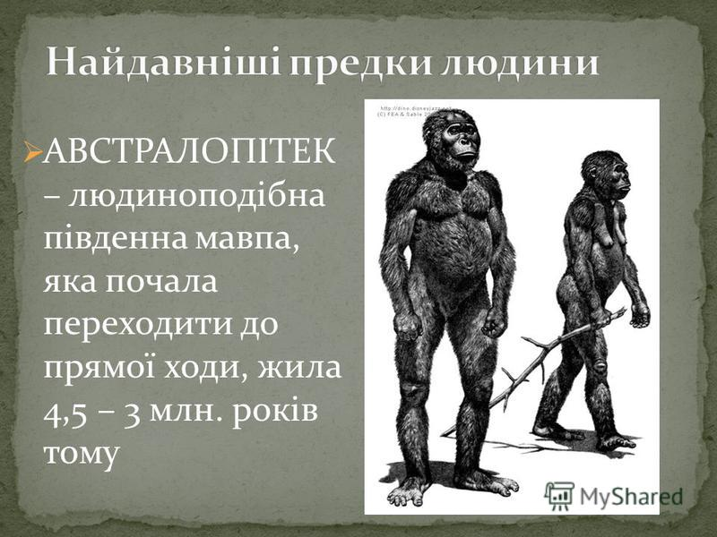 АВСТРАЛОПІТЕК – людиноподібна південна мавпа, яка почала переходити до прямої ходи, жила 4,5 – 3 млн. років тому