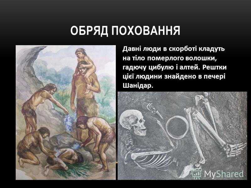 ОБРЯД ПОХОВАННЯ Давні люди в скорботі кладуть на тіло померлого волошки, гадючу цибулю і алтей. Рештки цієї людини знайдено в печері Шанідар.
