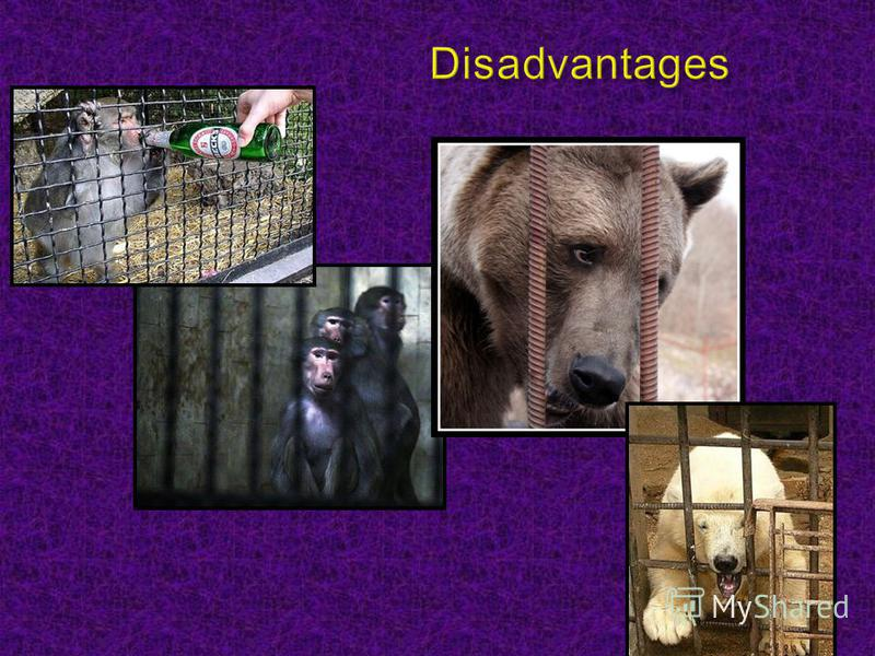 a look at the advantages and disadvantages of the act of animal captivity