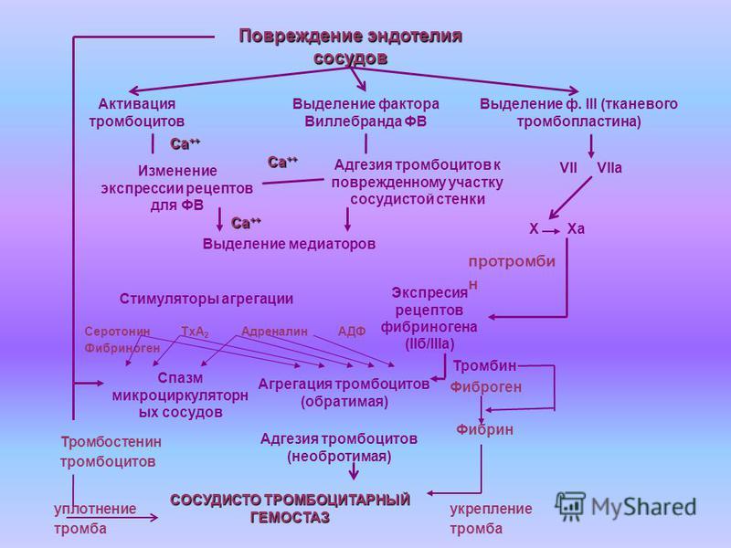 Повреждение эндотелия сосудов Активация тромбоцитов Выделение фактора Виллебранда ФВ Изменение экспрессии рецептов для ФВ Адгезия тромбоцитов к поврежденному участку сосудистой стенки Выделение медиаторов Экспресия рецептов фибриногена (IIб/IIIа) Сти