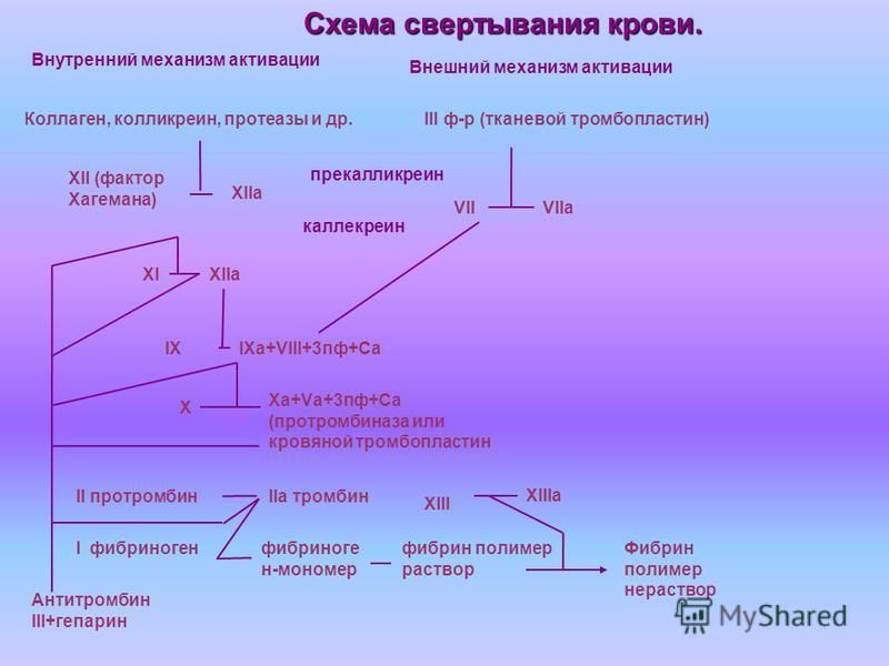 Внутренний механизм активации Внешний механизм активации Коллаген, колликреин, протеазы и др.III ф-р (тканевой тромбопластин) XII (фактор Хагемана) XIIа VIIVIIа XIXIIа IXIXа+VIII+3 пф+Са Xа+Vа+3 пф+Са (протромбиназа или кровяной тромбопластин X II пр