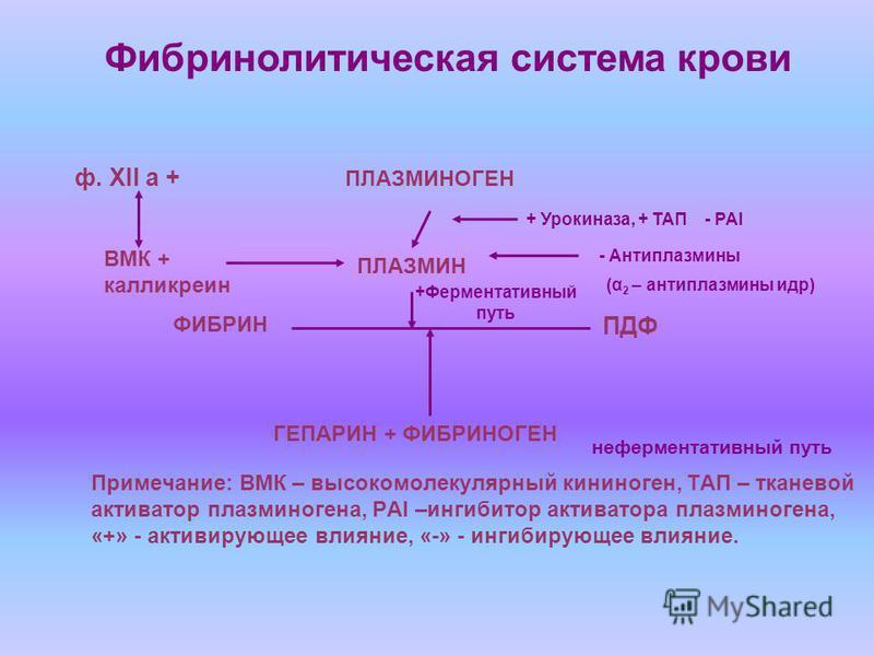 ПЛАЗМИНОГЕН ПЛАЗМИН ФИБРИН ПДФ ГЕПАРИН + ФИБРИНОГЕН ВМК + калликреин + Урокиназа, + ТАП - PAI - Антиплазмины (α 2 – антиплазмины идр) неферментативный путь Фибринолитическая система крови Примечание: ВМК – высокомолекулярный кининоген, ТАП – тканевой