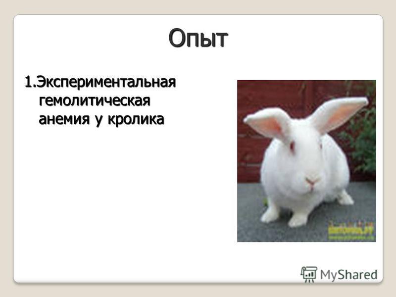 Опыт 1. Экспериментальная гемолитическая анемия у кролика