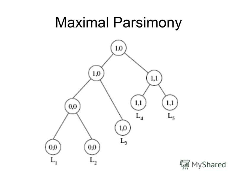 Maximal Parsimony